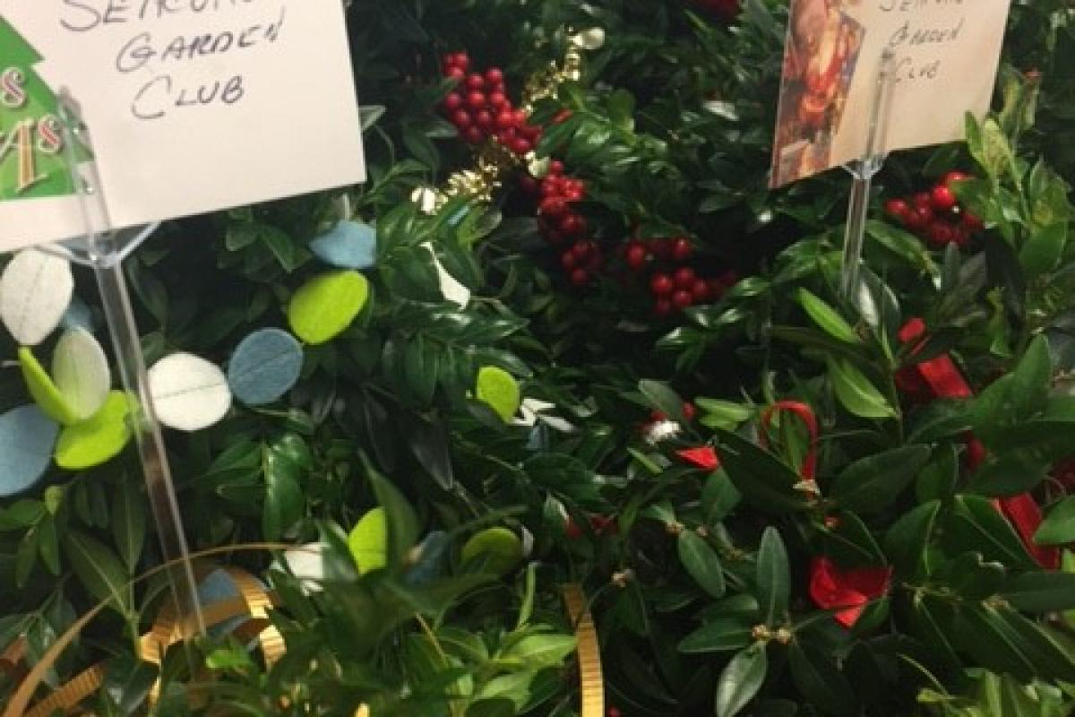 Boxwood trees for Seniors from the Seacoast Garden Club