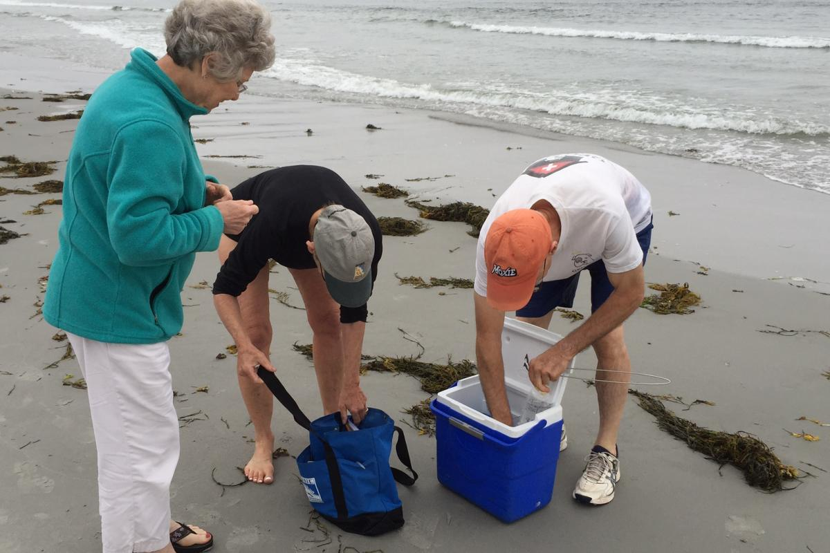 Healthy Maine Beach water quality testing at Goose Rocks Beach