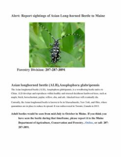 Asian, Long-Horned Beetle Alert