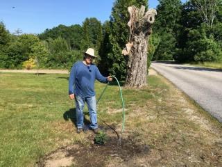Bruce King waters one of his two native American chestnut saplings.