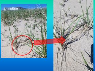Examples of Nests