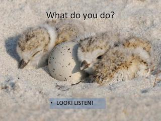 What do you do?  Look and Listen