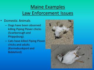 Law Enforcement Issues in Maine